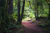 North Cascades, Thunder Creek - Bright brush along the Thunder Creek trail