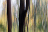 Seattle, Carkeek - Intentional camera movement of trees in fall colors