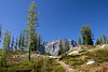 Rainy Pass, Easy Pass - Small stand of larch trees at the pass