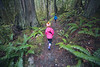 North Cascades, Newhalem - Two little kids hiking through forest and tall trees