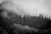 Whatcom, Mosquito Lake Bridge - Fog and clouds on a distant hillside