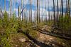 Pasayten, Horseshoe Basin - Hiker walking on trail through burned area with underbrush