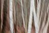 Kirkland, Juanita Bay - Motion abstract of aspen trunks