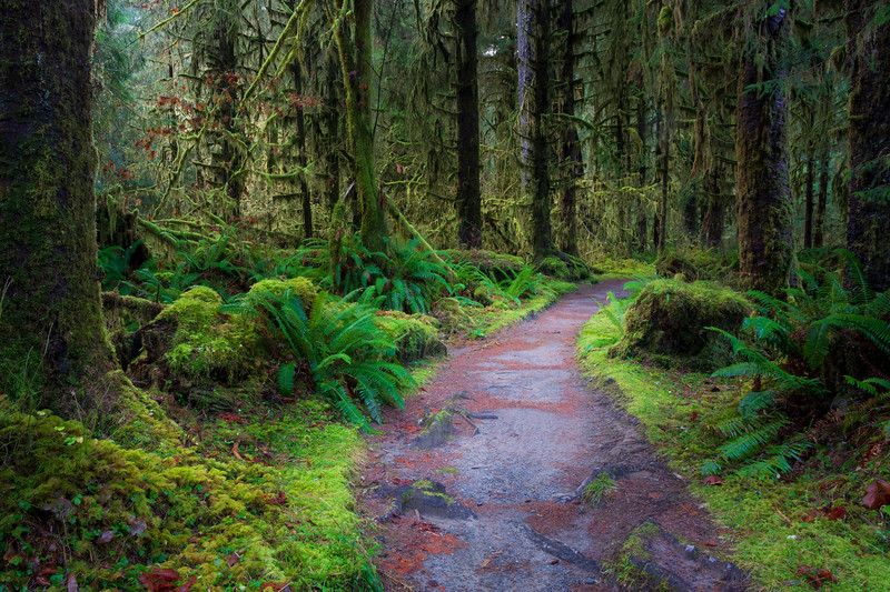 Hoh, Rainforest - Trail through moss covered forest floor