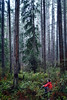Woodinville, Paradise Valley - Man sitting on log in wet forest with tall trees