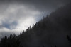 North Cascades, Newhalem - Trees on distant ridge with fog and light dusting of snow