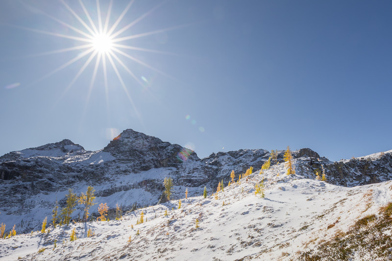 Rainy Pass. Maple Pass - Small group of larch on snowy hillside under brilliant sun