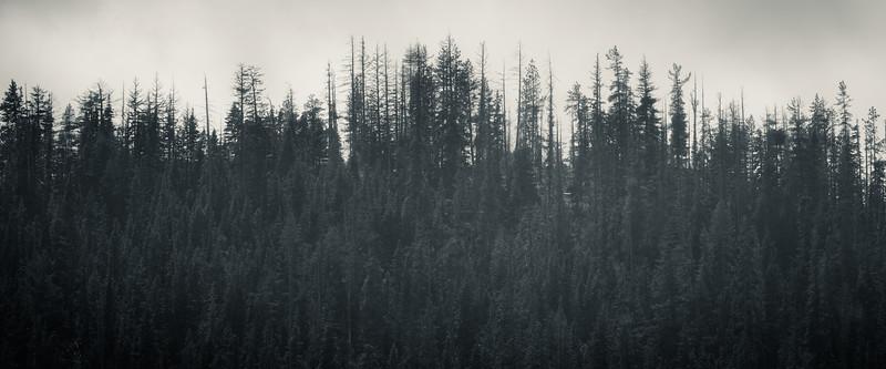 Kittitas, Bean Creek - Distant ridge with forest, black and white