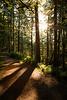 Darrington, Boulder River - Setting sun peeking through forest on trail with shadows