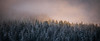 Snoqualmie Pass, Gold Creek Pond - Snow covered trees in the fog on distant ridge lit by setting sun