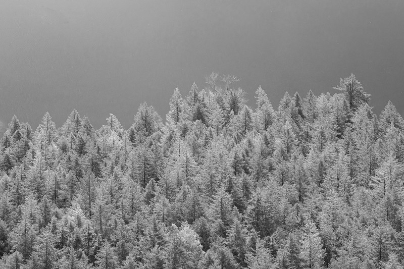 North Bend, Rattlesnake - Forest at edge of lake, black and white