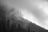 Snoqualmie Pass, Exit 47 - Trees on distant ridgeline in fog