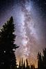 Rainier, Paradise - Milky Way arch through the forest with ligh pollution on the horizon