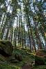 Whatcom, Baker Lake - Trail winding through tall trees in the sun