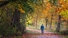 Carnation, Tolt River - Man walking on a trail with trees showing fall colors
