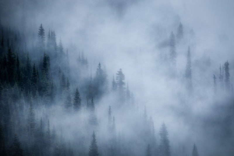 Rainier, Paradise - Cloud forest on a distant ridge in moody blues