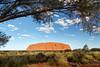 Northern Territory, Uluru - Uluru in full sun with tree