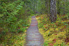 North Cascades, Newhalem - Path through forest and moss