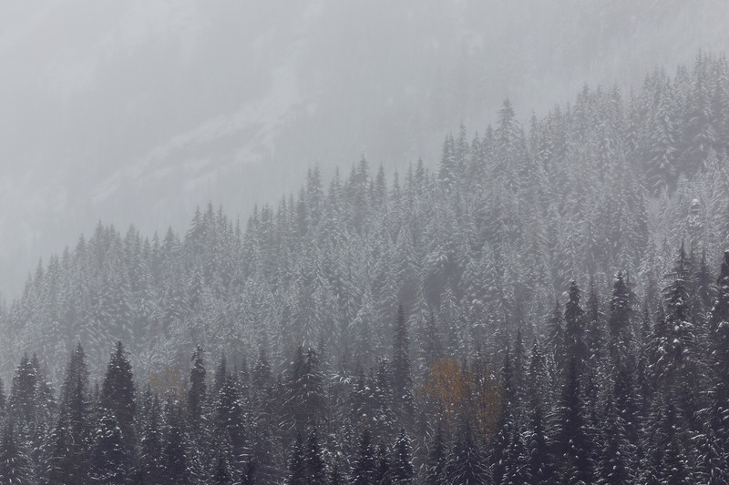 Snoqualmie Pass, Gold Creek Pond - Three layered view of hillside in the first snowstorm of winter