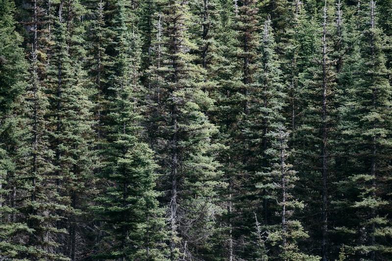 Kittitas, Bean Creek - Abstract of green forest