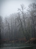 Monroe, Al Borlin - Tree leaning into the Skykomish River in the fog