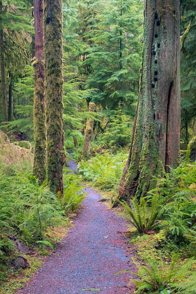 Lake Crescent, Lake - Trail winding between two trees