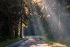 Hoh, Rainforest - Crepsecular rays over the road