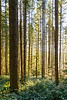 North Bend, Rattlesnake - Morning light through the trees in a forest
