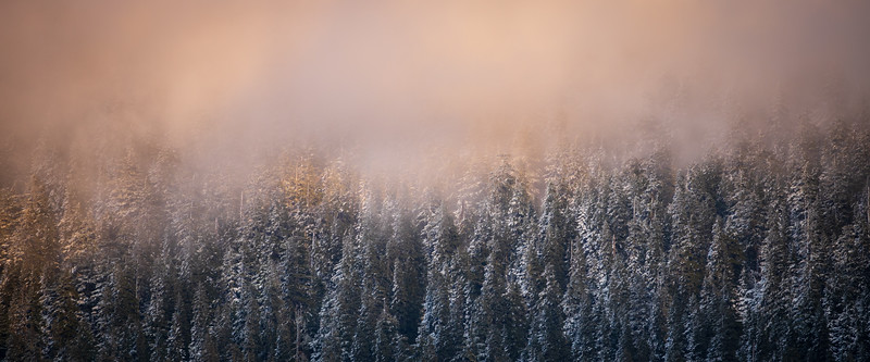 Snoqualmie Pass, Gold Creek Pond - Snow covered trees in fog lit by setting sun