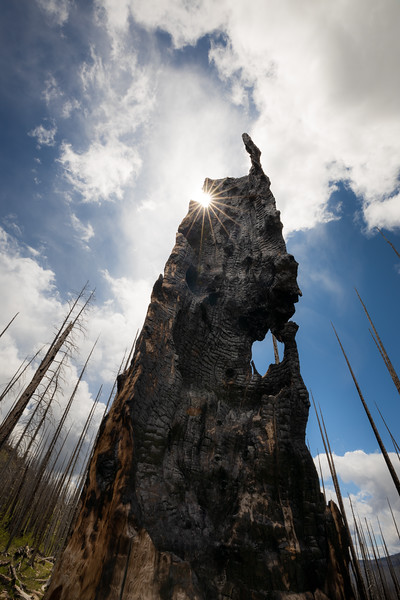Pasayten, Horseshoe Basin - Burned out tree stump with sun star and clouds