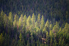 Kittitas, Blewett Pass - Tall trees on ridge lit by break in the clouds