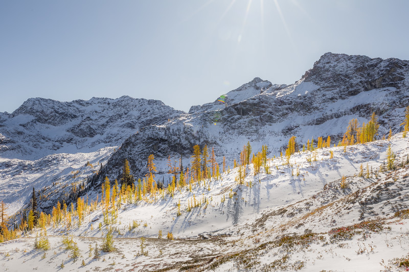 Rainy Pass. Maple Pass - Larch on a small ridge under a bright sun on a snowy day