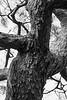 Japan, Kyoto - Old tree bark abstract