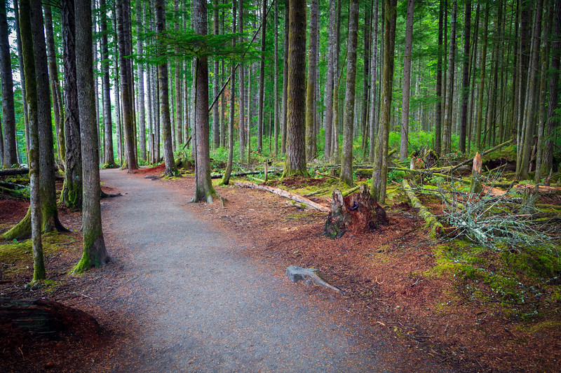Campbell River, Elk Falls - Forested path in Elk Falls Provincial Park