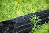 Leavenworth, Eightmile - Burnt black log in a sea of green spring growth