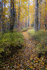 Easton, Pond - Fallen leaves on path through tall fall colors