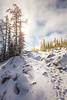 Rainy Pass. Maple Pass - Snow-covered trail leading to a stand of larch and large tree with sun star