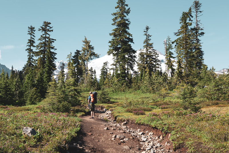Whatcom, Park Butte - Hiker on trail with Mt. Baker behind trees