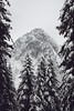 Snoqualmie Pass, PCT South - Guye Peak in a snowstorm framed by several evergreens