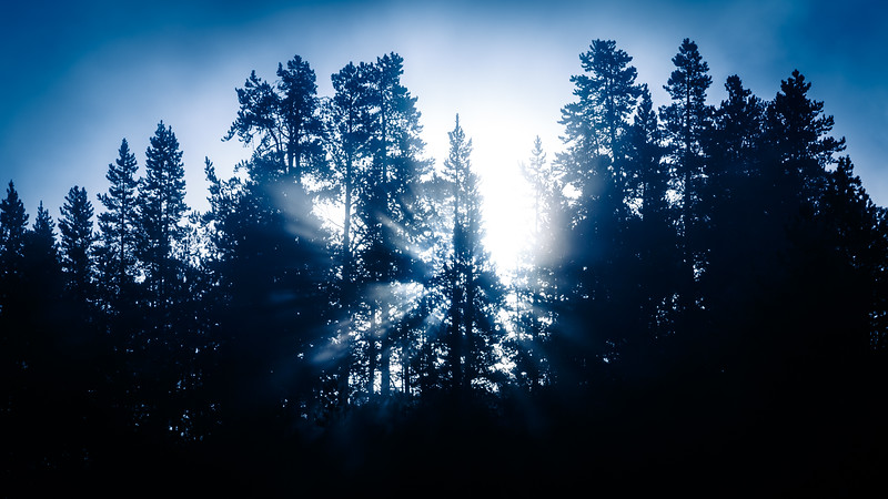 Yellowstone, Landscape - Sun rise through trees and mist from thermal features