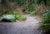 Snohomish, Lord Hill - Path leading into the forest diagnonally across frame with large rock