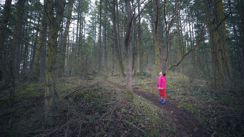 Skagit, Kukutali Preserve - Little girl looking up at stand of trees