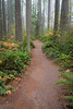 Woodinville, Paradise Valley - Trail through the woods in the fog