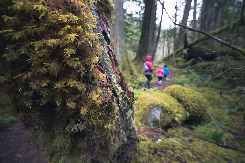 North Cascades, Newhalem - Close up of moss on stump with family walking out of focus in background