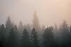 Rainier, Naches - Sun rising over foggy forest