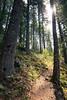 North Cascades, Diablo Lake - Sun peeking through trees on the trail