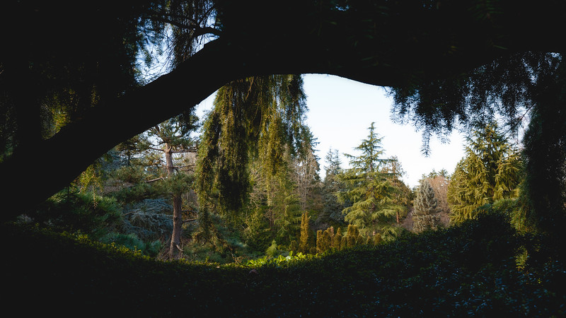 Seattle, Kubota Garden - View of trees through a nearby tree creating an arch