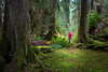 Hoh, Rainforest - Hiker in red jacket examining a moss covered clearing