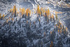 Rainy Pass. Maple Pass - Arc of larch on a ridge lit by the setting sun