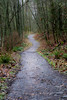 Snohomish, Lord Hill - Path leading up a hill amongst deciduous trees